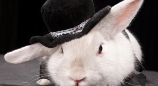 Как сделать ушки зайца