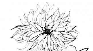 Как рисовать цветы карандашом