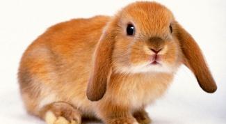 Как приучить кролика к туалету