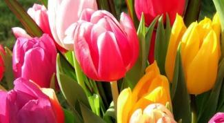 Как сделать тюльпан