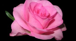 Как сделать розу из бисера