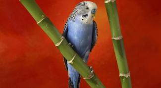 Как вылечить попугая