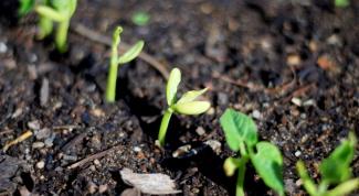 Как вырастить сад
