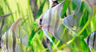 Как изготовить аквариум