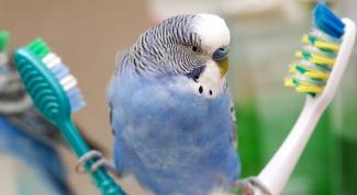 Как мыть птиц