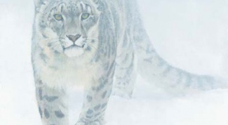 Как научиться рисовать леопарда