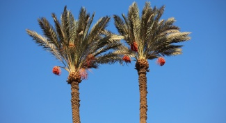 Как сделать пальму