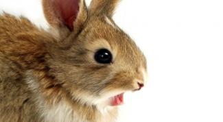 Как стричь кролика