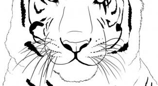 Как нарисовать тигра в 2017 году
