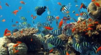 Как клеить аквариумы