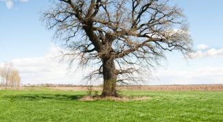 Как зарегистрировать свой земельный участок