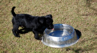 How to feed your puppy at the age of one month