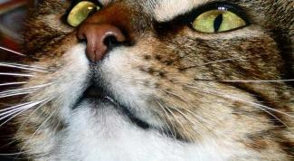 Как давать коту таблетки