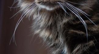 Как отучить кота драть