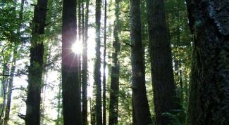 Как выжить в лесу в 2018 году