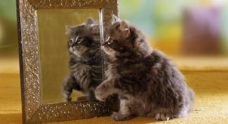 Как отобразить зеркально