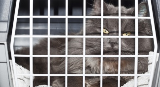 Как перевезти кошку