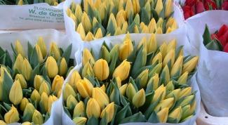 Как открыть свою цветочную палатку
