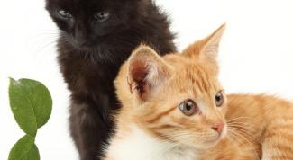 Как подружить котов