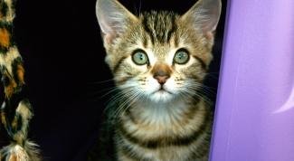 Как приучить котёнка к унитазу
