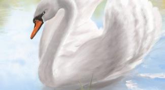 Как нарисовать карандашами лебедя