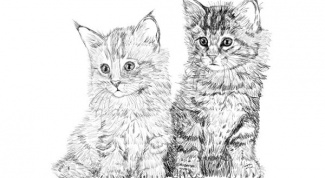 How to draw a cat with pencil