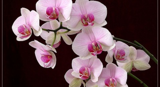 Как сажать орхидеи
