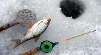 Как поймать зимой карпа