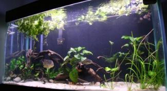 Как поменять воду в аквариуме