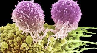Как повысить уровень лейкоцитов