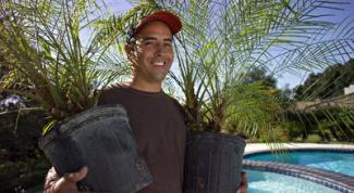 посадить пальму