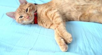 Как свести кота и кошку