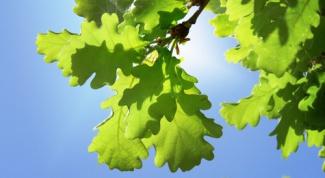 Как определить дерево