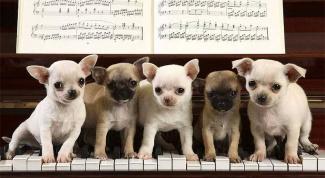 Как сыграть собачий вальс на пианино