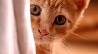 How to calm a kitten