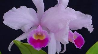 Как посадить орхидеи