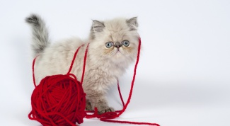 сделать игрушку для кошки своими руками