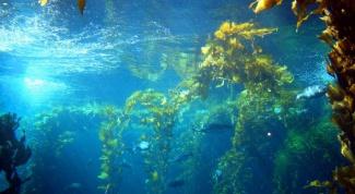 How to make seaweed salad