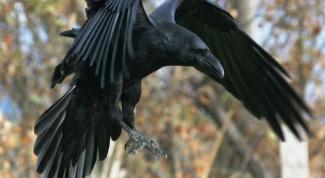 Как сделать ворона