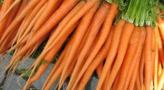 Как посеять морковь
