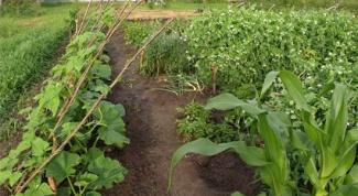 How to fertilize vegetable garden