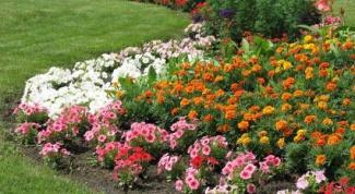 Как украсить участок цветами