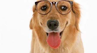 Как узнать породу своей собаки