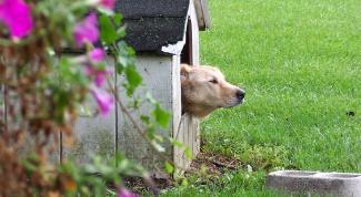 Как сделать домик для собаки