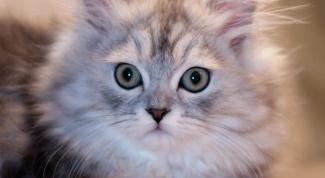 Как сделать документы на кошку