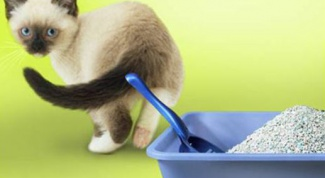 How to teach your cat to potty