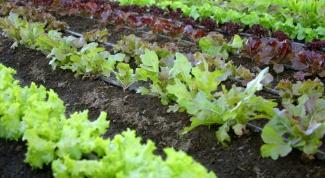 Как расположить грядки на огороде