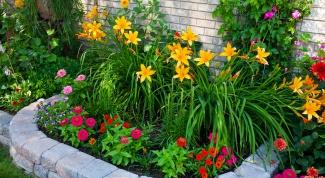 Как разместить на клумбе цветы