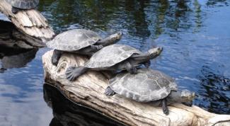 сделать островок для черепахи