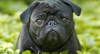 Как сделать документы для собаки
